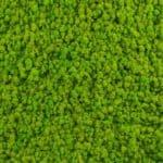 Verde Lime